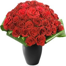 Romeo 36 Red Roses