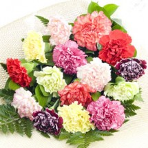 Mixed Colour Carnations