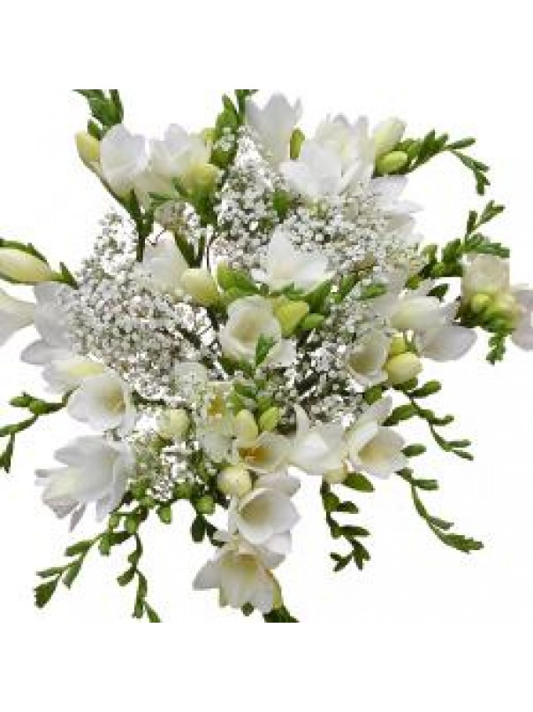 White Freesia 15 Stems