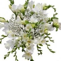 Freesia bouquets freesia flowers delivery send freesias buy white freesia 1 mightylinksfo