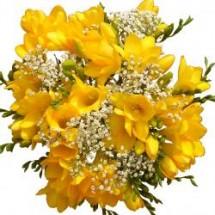 Yellow Freesia 15 Stems