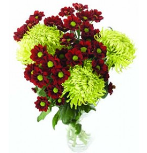 Mixed Colour Chrysanths