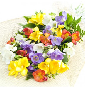 Mixed Freesia 15 Stems